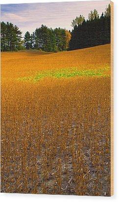 Golden Field Wood Print by Luba Citrin