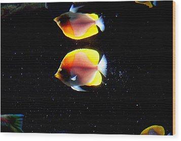 Golden Fish Reflection Wood Print