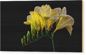 Golden Freesia Wood Print by Floyd Hopper