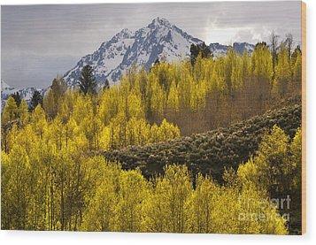 Golden Grand Teton Wood Print by Johanne Peale