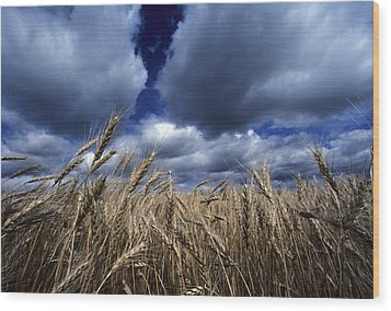 Golden Heads Of Wheat In A Field Wood Print by Annie Griffiths