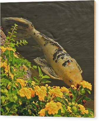 Golden Koi Wood Print by Kirsten Giving