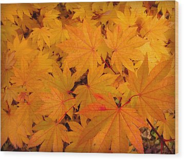 Golden Leaves Of Maple Wood Print by Cindy Wright