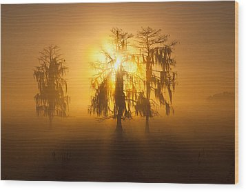 Golden Morning Wood Print by Claudia Domenig
