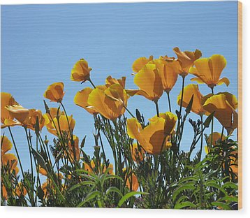 Wood Print featuring the photograph Golden Poppies Basking In The Sun by Cindy Wright