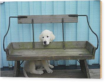 Golden Retrieven Puppy Wood Print by Mikael Törnwall