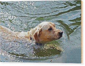 Golden Retriever Swimming Close Wood Print by Susan Leggett