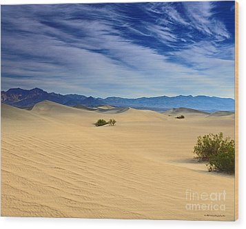 Golden Sand Dunes Death Valley National Park Wood Print by Nature Scapes Fine Art