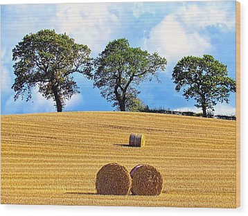 Golden Three Plus Thee Wood Print by Patrick MacRitchie