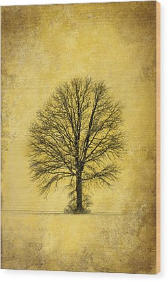 Wood Print featuring the photograph Golden Tree by Mary Timman