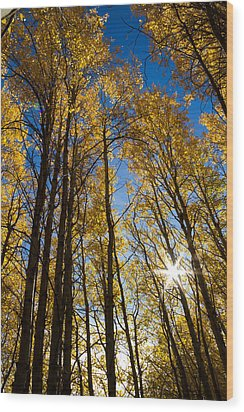Wood Print featuring the photograph Golden Whispers by Randy Wood
