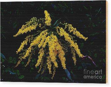 Goldenrod Wood Print by Priscilla Richardson