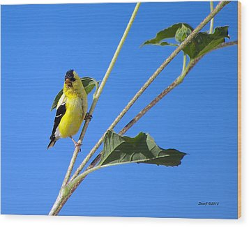 Goldfinch On Sunflowers Wood Print by Stephen  Johnson