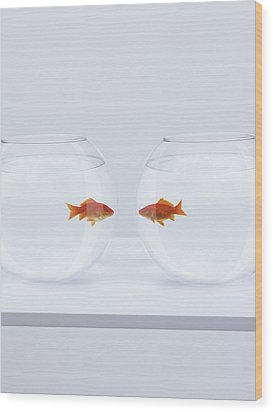 Goldfish In Separate Fishbowls Looking Face To Face Wood Print by Adam Gault