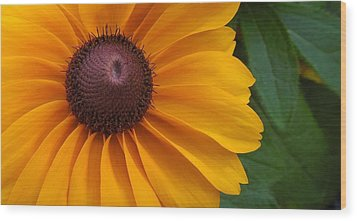 Goldilocks  Flower Wood Print by Chad and Stacey Hall