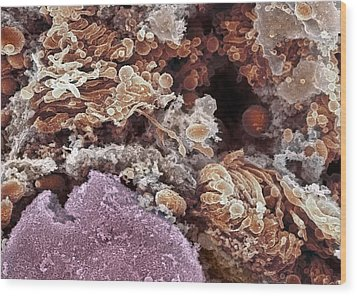 Golgi Apparatus, Sem Wood Print by Dr David Furness, Keele University
