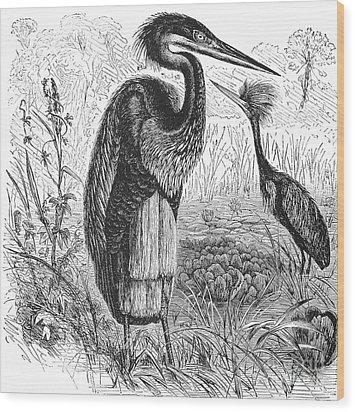 Goliath Heron Wood Print by Granger