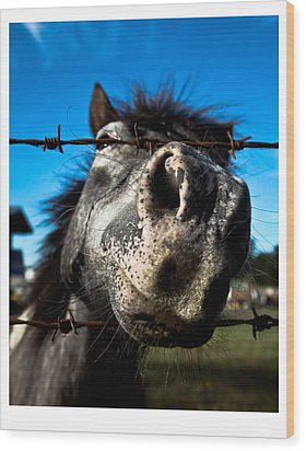 Golly A Curious Horse Wood Print by Carole Hinding