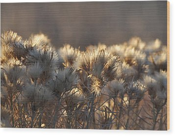 Wood Print featuring the photograph Gone To Seed by Fran Riley
