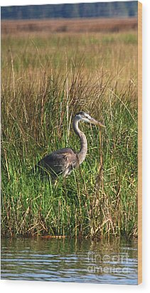 Good Morning - Blue Heron Wood Print