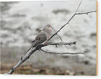 Wood Print featuring the photograph Good Morning Dove by Elizabeth Winter