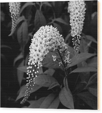 Wood Print featuring the photograph Gooseneck Loosestrife by Michael Friedman