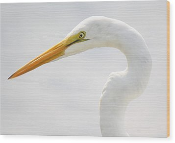 Gorgeous Great White Egret Wood Print by Paulette Thomas