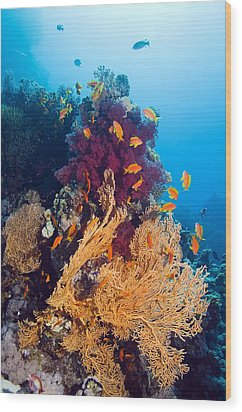 Gorgonian And Soft Coral Wood Print by Georgette Douwma
