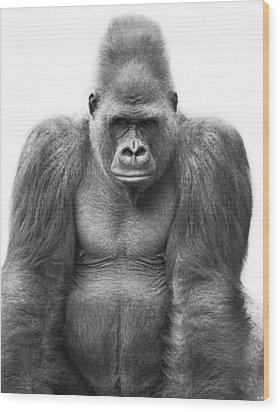 Gorilla Wood Print by Darren Greenwood