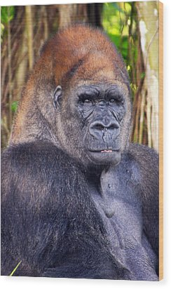 Gorilla Posing Wood Print by Joe Myeress