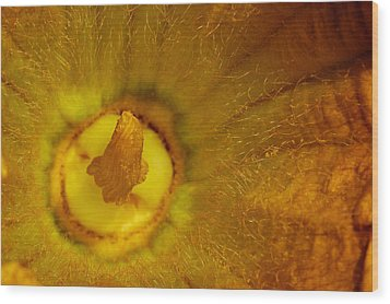 Gourd's Flower Wood Print