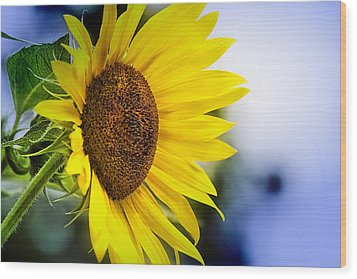 Graceful Sunflower Wood Print by Trudy Wilkerson