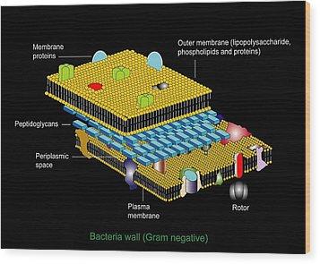 Gram Negative Cell Wall, Artwork Wood Print by Francis Leroy, Biocosmos