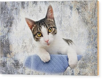 Grand Kitty Cuteness 2 Wood Print by Andee Design