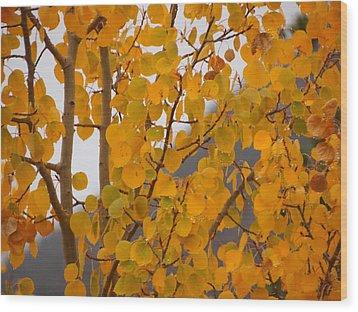 Grand Lake Aspen Wood Print