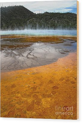 Grand Prismatic Spring Wood Print by Gregory Dyer