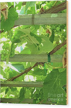 Grape Arbor Wood Print by Methune Hively