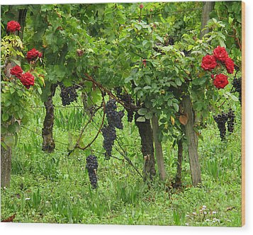 Grape Vines And Roses I Wood Print by Greg Matchick