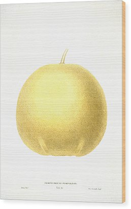 Grapefruit Wood Print by Granger