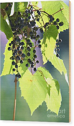 Grapes And Leaves Wood Print by Michal Boubin