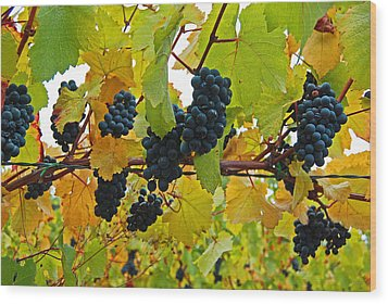 Grapes On The Vine Wood Print by Jani Freimann