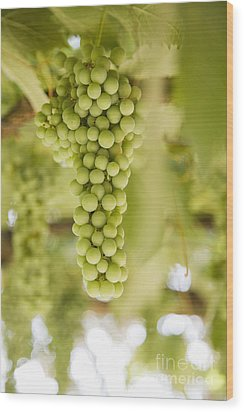 Grapes On Vine Wood Print by Andersen Ross