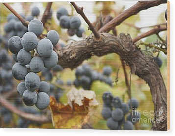 Grapes On Vine Wood Print by Dennis Faucher