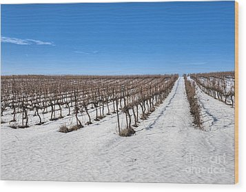 Grapevines In Snow Wood Print by Noam Armonn
