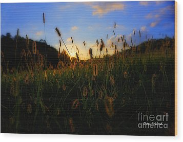 Grass In Field At Sunset Wood Print by Dan Friend