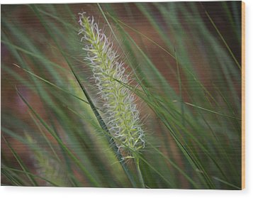 Grass In The Wind Wood Print