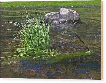 Grass Rock Stick Wood Print