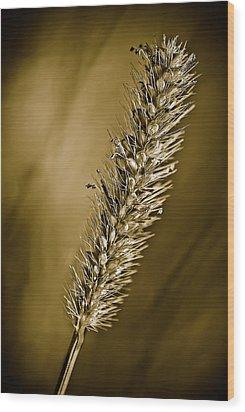 Grass Seedhead Wood Print by  Onyonet  Photo Studios