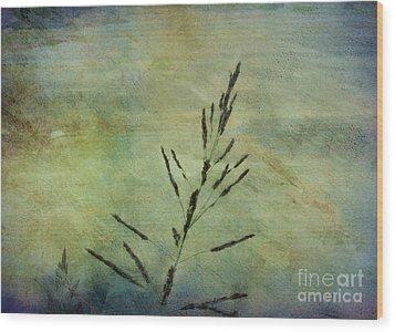 Grass Stem Wood Print by Judi Bagwell