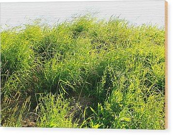 grass. WILD GRASS Wood Print by Michael Clarke JP
